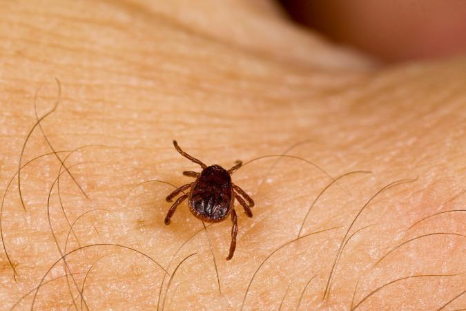 Heals Insect Bites