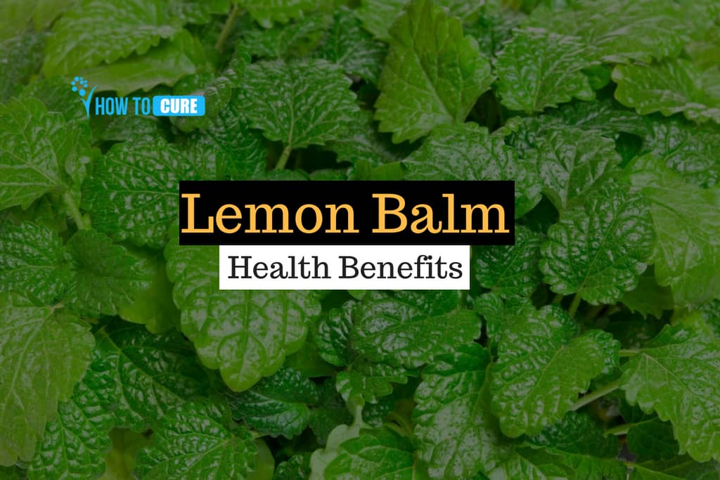 15 Proven Lemon Balm Health Benefits On The Body How To Cure