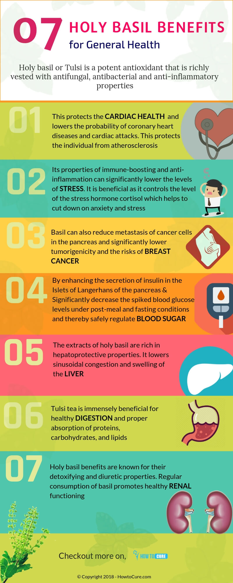 holy basil benefits for general health - infographic