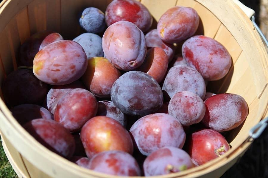 Prunes to combat anemia