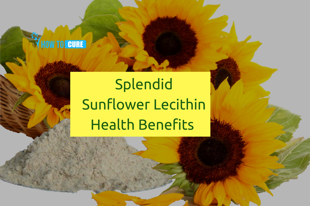 Sunflower Lecithin Benefits Uses And Side Effects