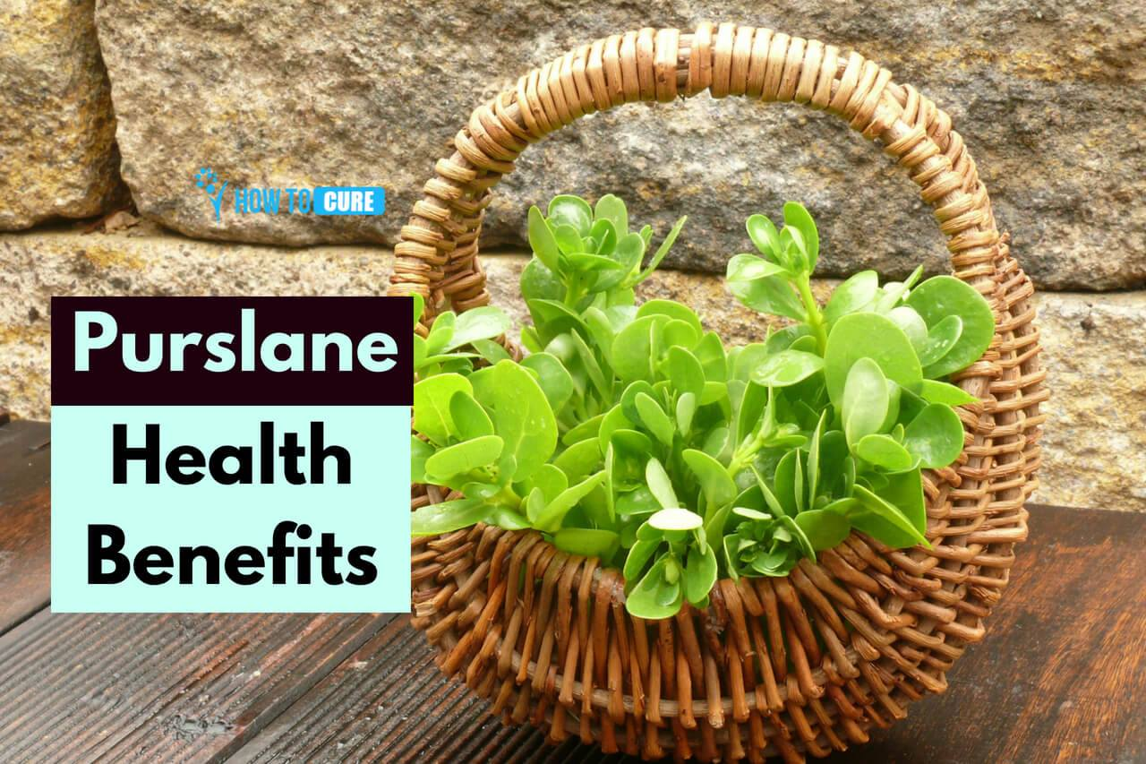 15 Amazing Purslane Benefits For A Healthy Body