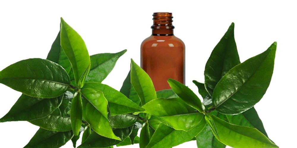 Tea tree oil is to treat infected ingrown hair on legs