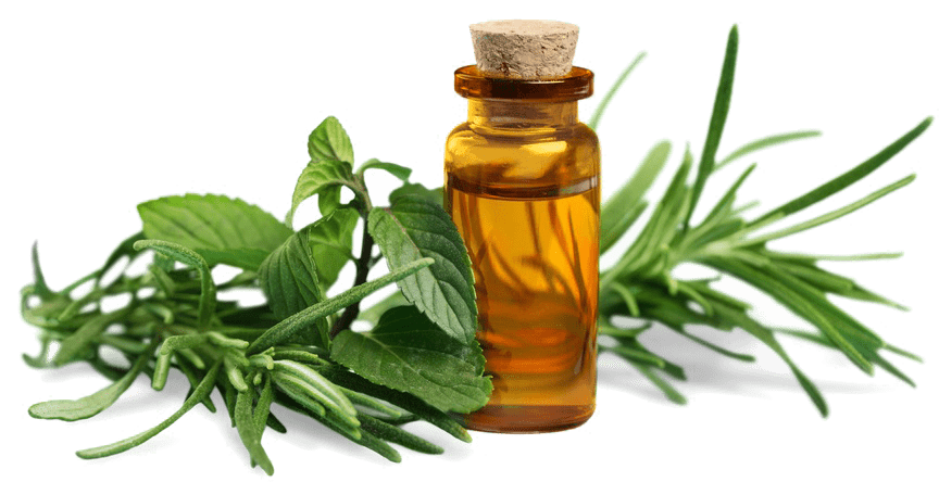 vetiver essential oil