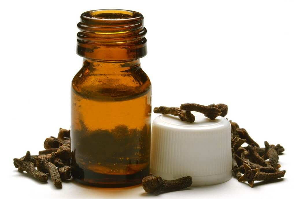 clove oil for lice
