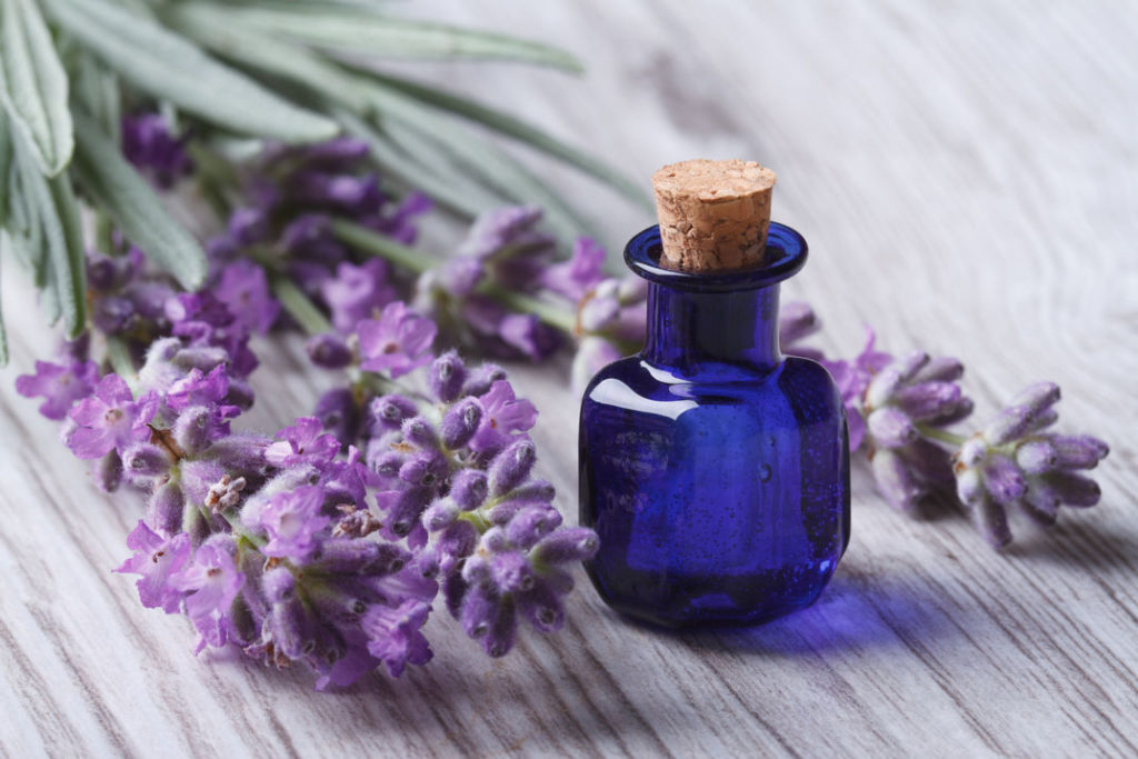 lavender oil for chest congestion