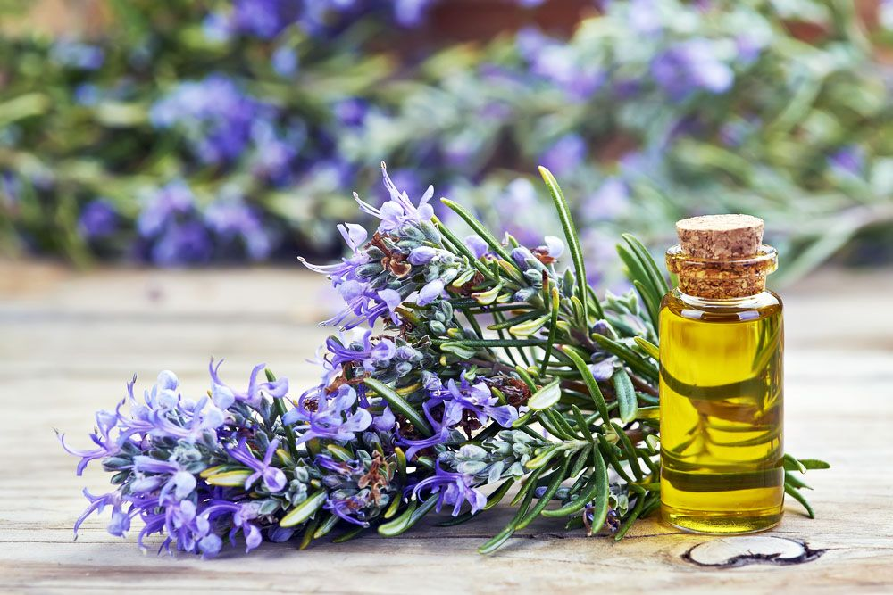 rosemary oil for kidney stones