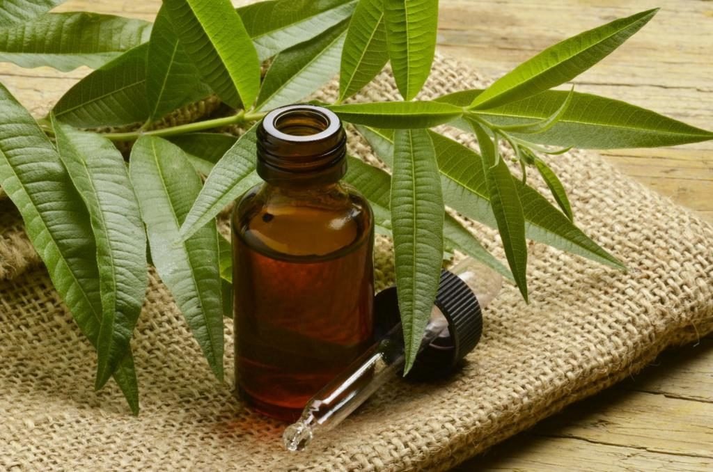 tea tree oil for lice