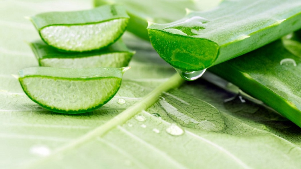 aloe vera for get rid of candida