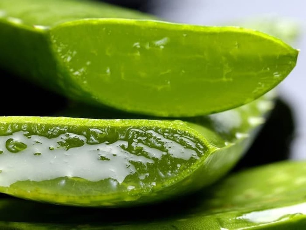 aloe vera gel to treat a staph infection
