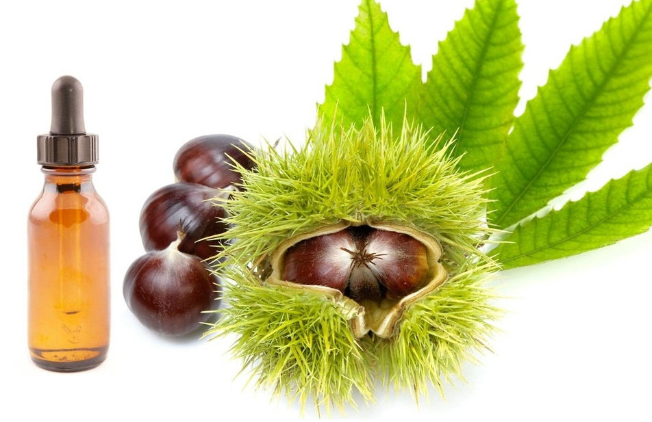 horse chestnut oil to varicose veins