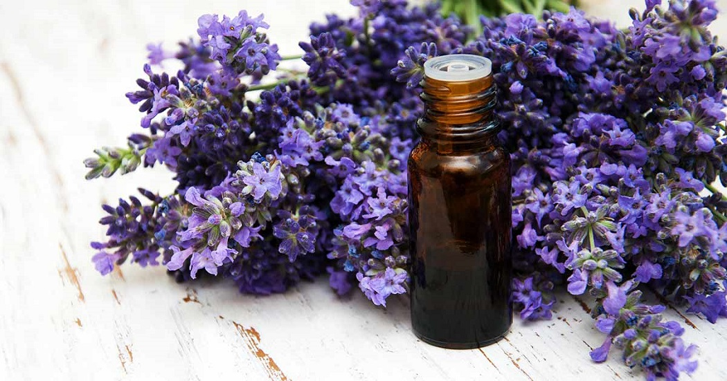 lavender essential oilfor hair loss