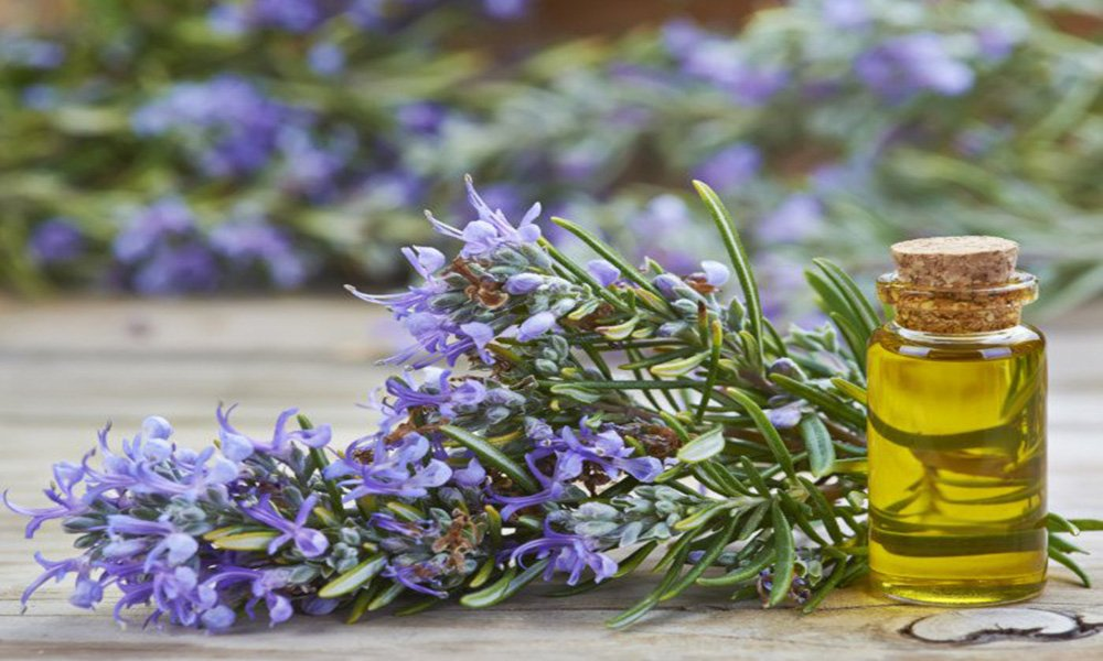 rosemary essential oil for sebaceous filaments
