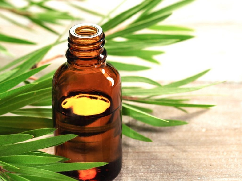 tea tree oil for removing warts
