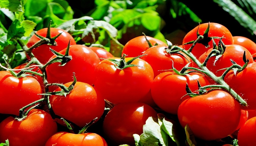 tomatoes for weight loss
