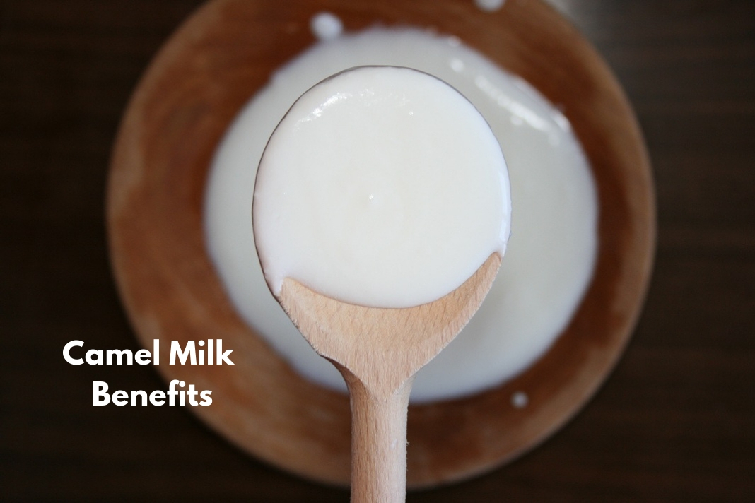 camel milk benefits