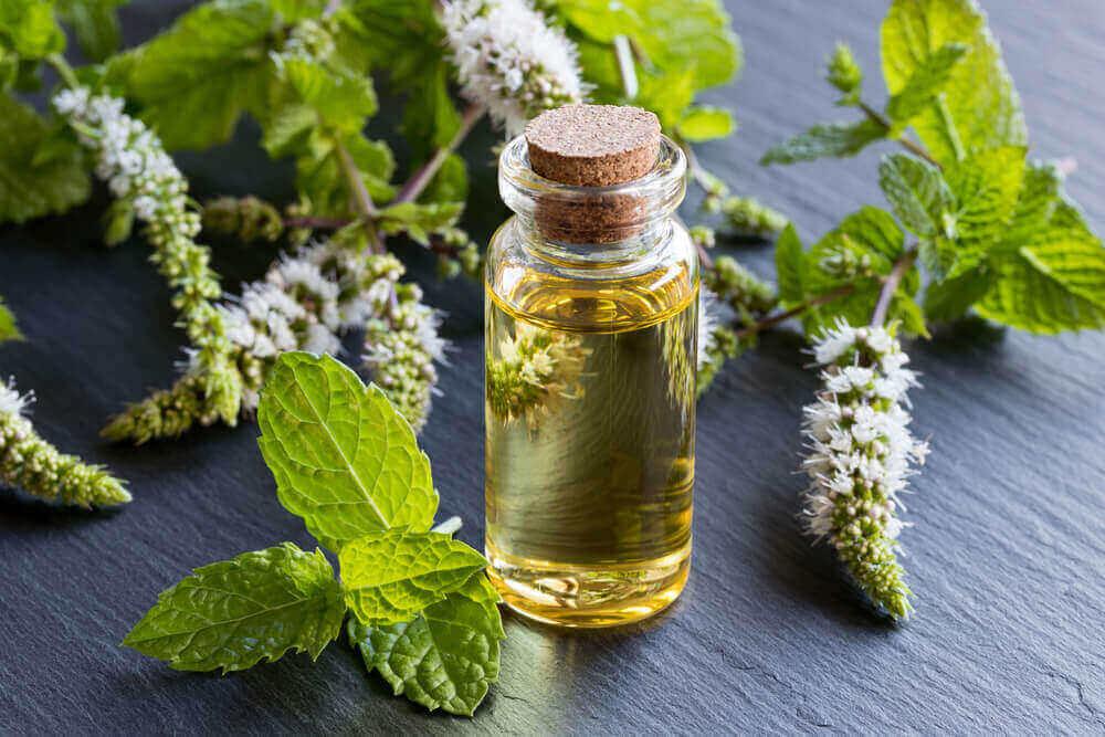 Peppermint Oil for Diarrhea Treatment