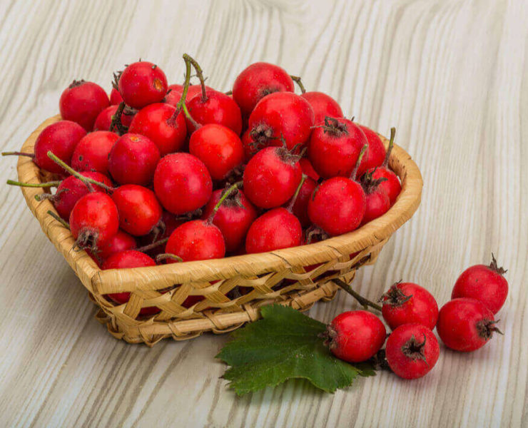 Hawthorn berry benefits
