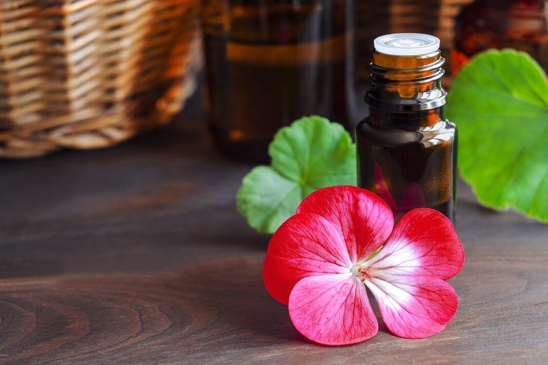 Geranium oil benefits